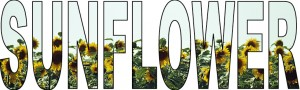 sunflowers-example2