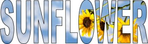 sunflowers-example3